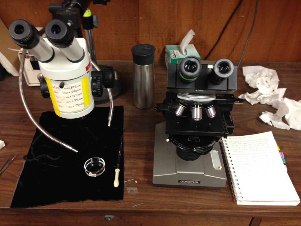 My desk at the marine lab. 1 April 2016 © Allison J. Gong