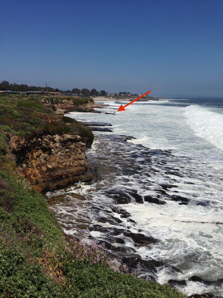 Natural Bridges State Beach, viewed from Long Marine Lab, 4 May 2015. © Allison J. Gong