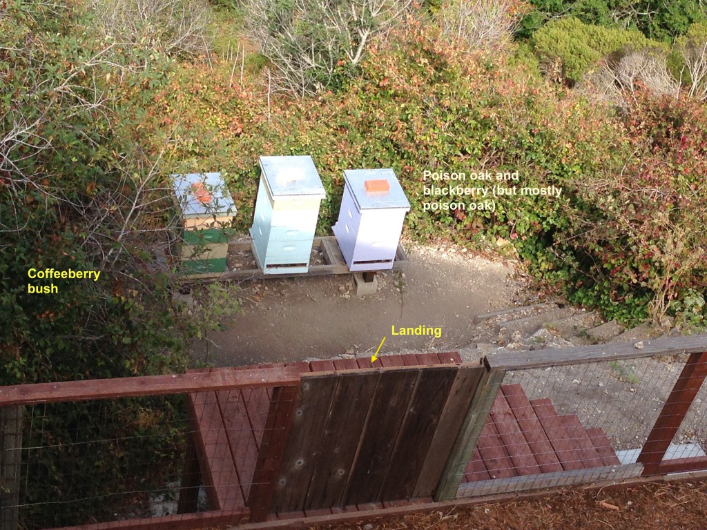 Green, Blue, and Purple hives facing into the canyon behind my house, 16 July 2015. © Allison J. Gong