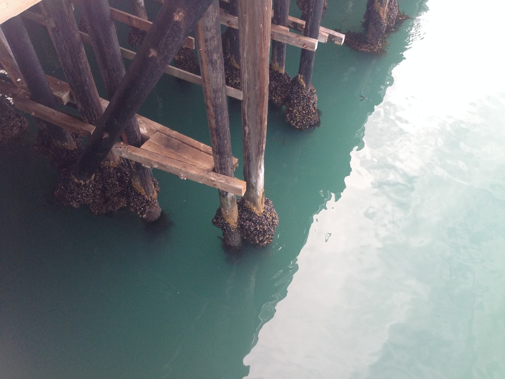 Water under the Santa Cruz Municipal Wharf, 19 July 2015. © Allison J. Gong