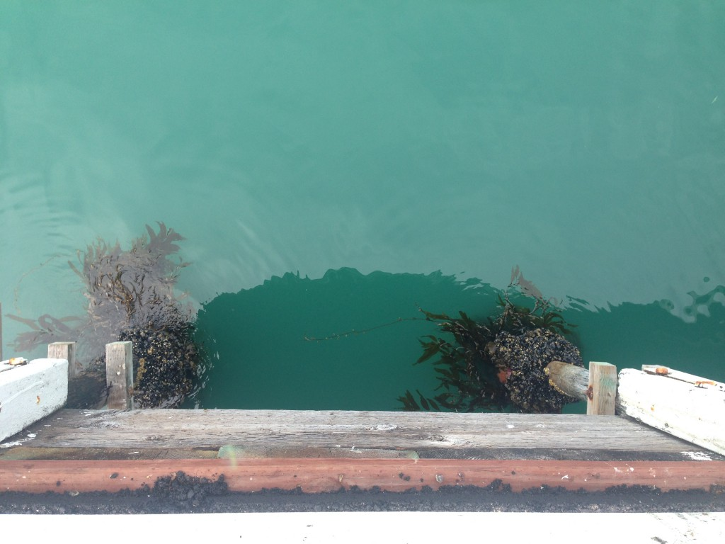 Water on the west side of the Santa Cruz Municipal Wharf, 19 July 2015. © Allison J. Gong