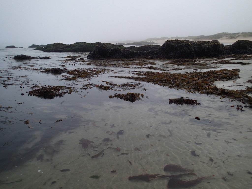 Intertidal at Franklin Point, 3 July 2015. © Allison J. Gong