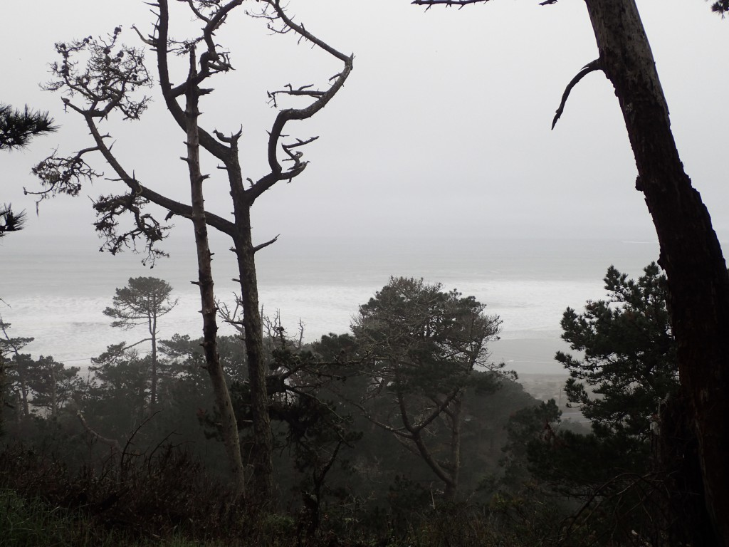 View of Pacific Ocean from Rancho del Oso. 29 January 2016 © Allison J. Gong