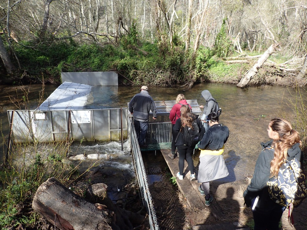 Students visiting the fish trap on Scott Creek. 19 February 2016 © Allison J. Gong