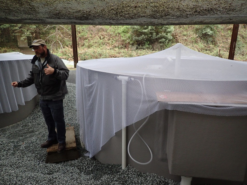 Erick explains hatchery operations, standing next to one of the outdoor pens where smolts are held. 19 February 2016 © Allison J. Gong
