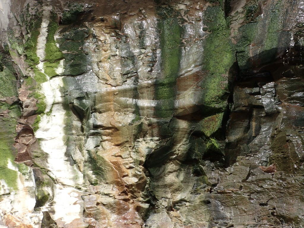 Streaks of green algae on sandstone cliff face at Davenport Landing. 6 March 2016 © Allison J. Gong