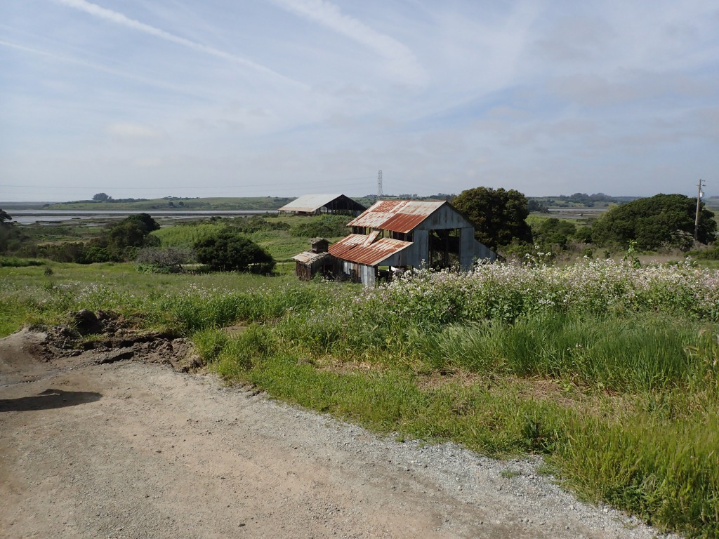 Little Barn (foreground) and Big Barn (background) at Elkhorn Slough. 18 March 2016 © Allison J. Gong