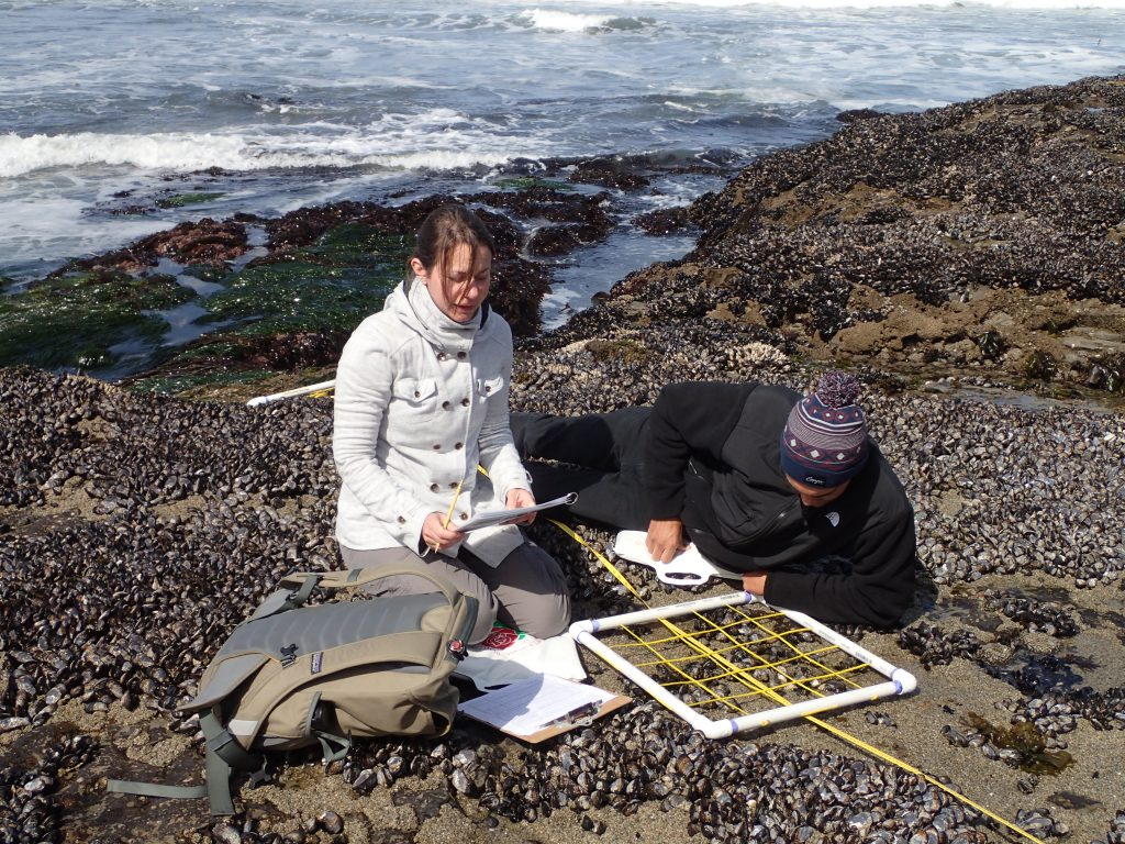 LiMPETS sampling 29 April 2016 © Allison J. Gong