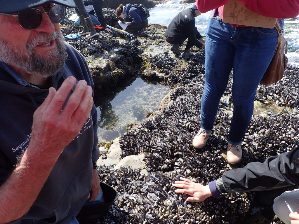 Dr. John Pearse explains what owl limpets are and how to find them. 29 April 2016 © Allison J. Gong