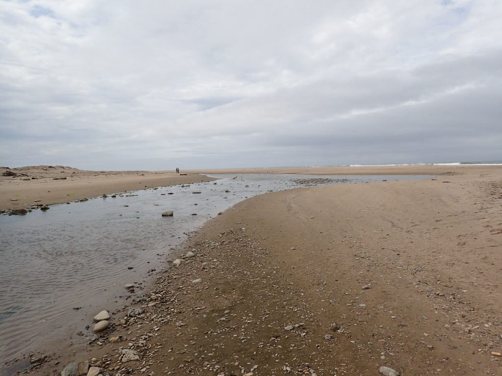 Gazos Creek as it flows onto the beach. After rains it breaks through the sand bar and flows into the ocean. 7 May 2016 © Allison J. Gong