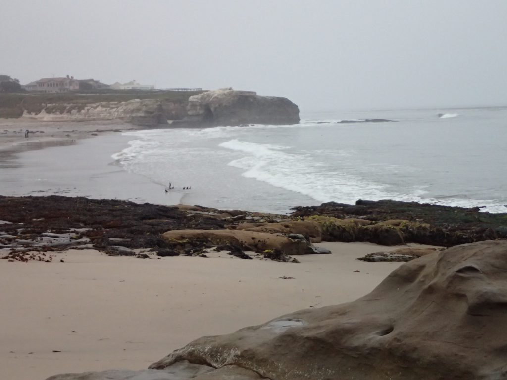 Natural Bridges State Beach 6 June 2016 © Allison J. Gong