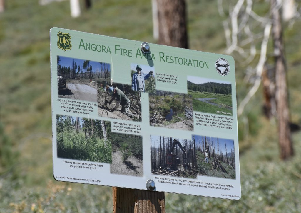 Post-fire restoration work at Angora 8 August 2016 © Allison J. Gong