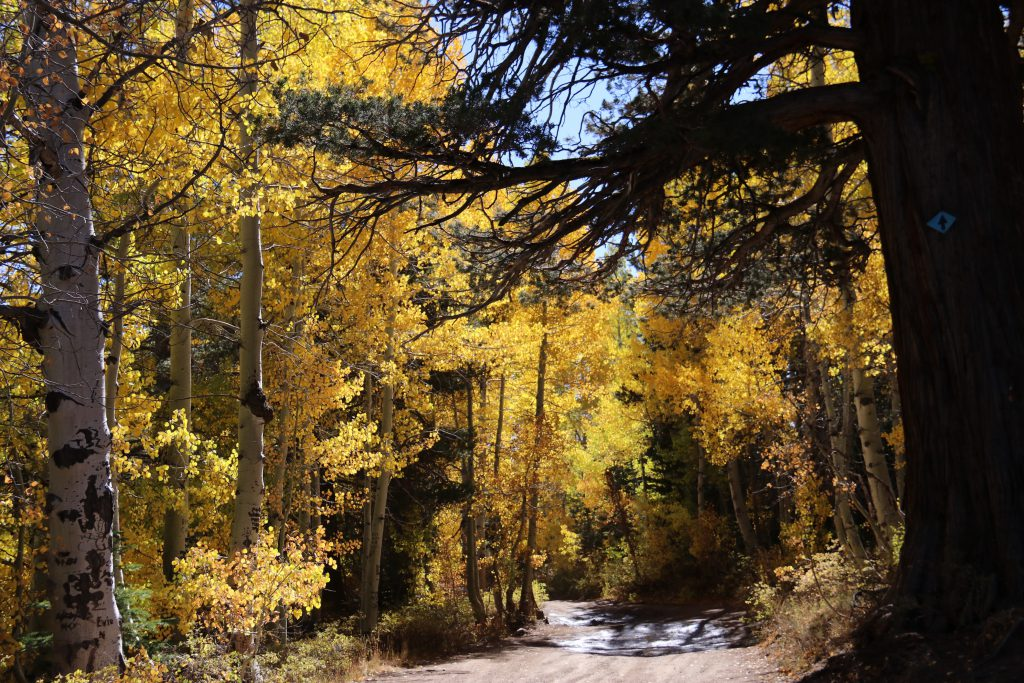 Fall colors in Hope Valley. 8 October 2016 © Allison J. Gong