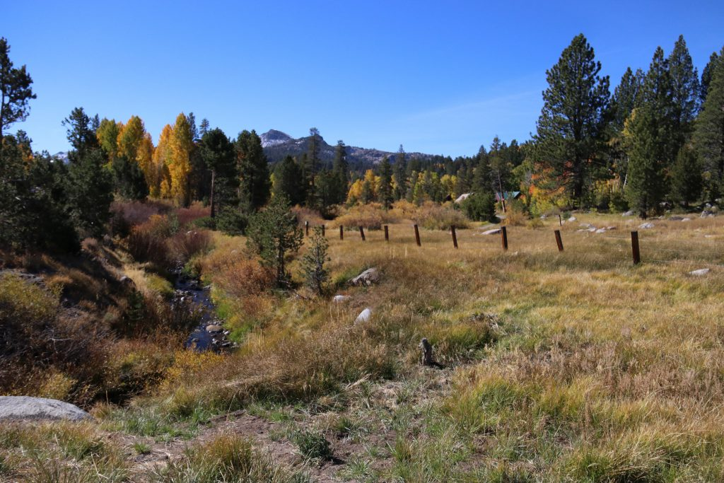 Fall colors and meadow at Hope Valley. 8 October 2016 © Allison J. Gong