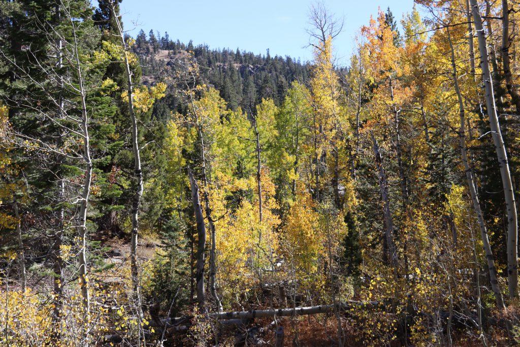 Fall colors near Ebbetts Pass. 8 October 2016 © Allison J. Gong