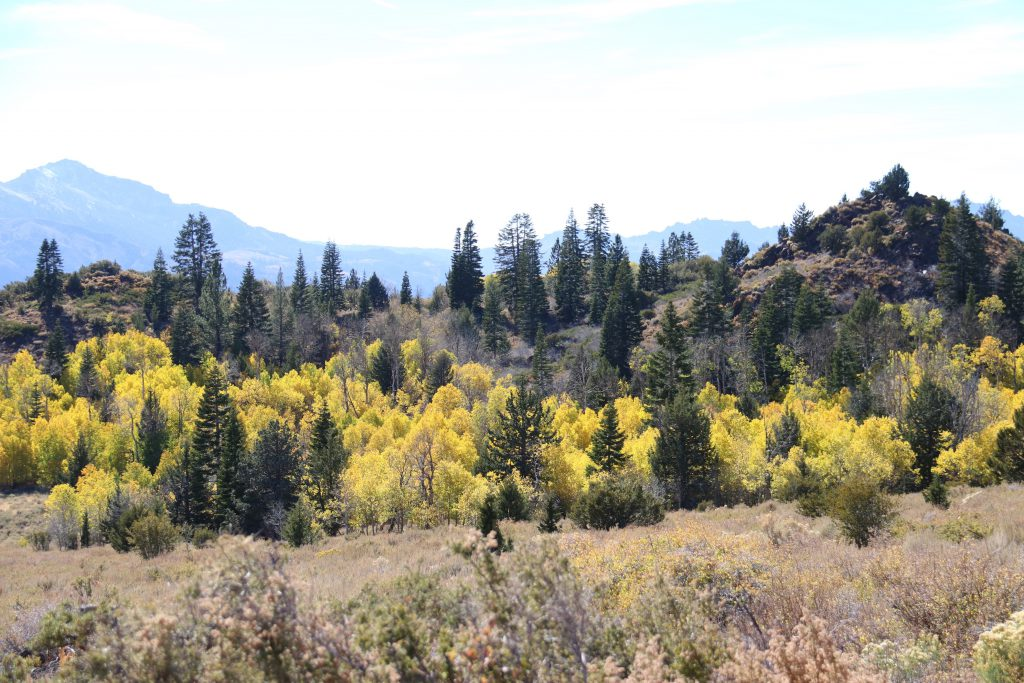 Fall colors near Monitor Pass. 8 October 2016 © Allison J. Gong