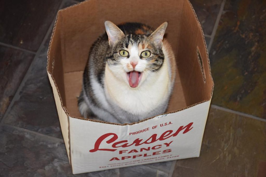 Lucie in a box 4 November 2016 © Allison J. Gong