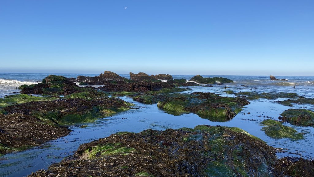 Rocky intertidal at Waddell