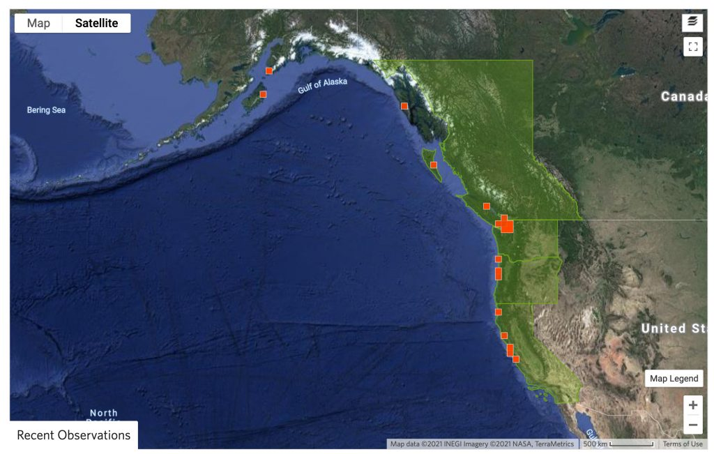 Map of northeast Pacific coast, showing sighting of tidepool snailfish recoreded in iNaturalist