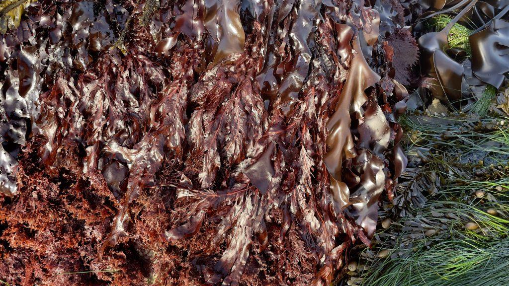 in the rocky intertidal